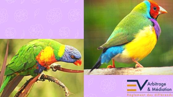 Oiseaux, couleurs, arc-en-ciel